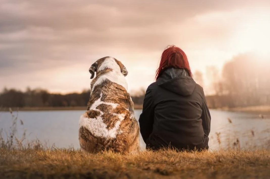 keep dogs happy during quarentine