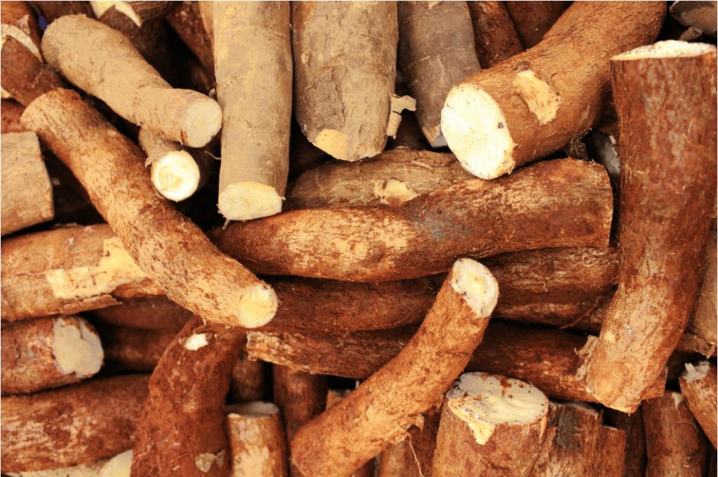 cassava as animal feed